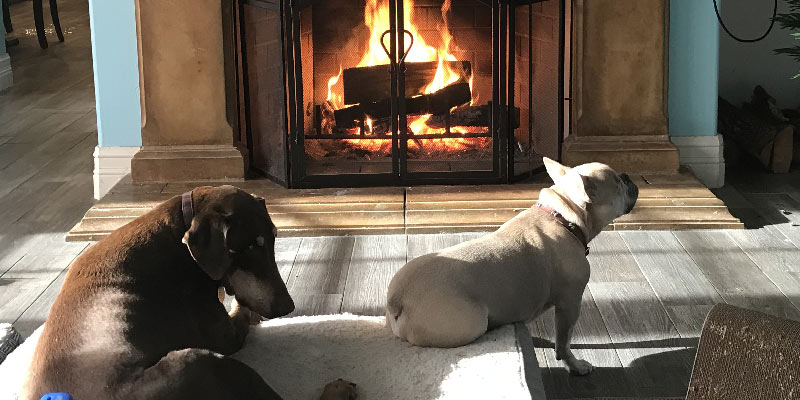 Dogs in front of the fireplace